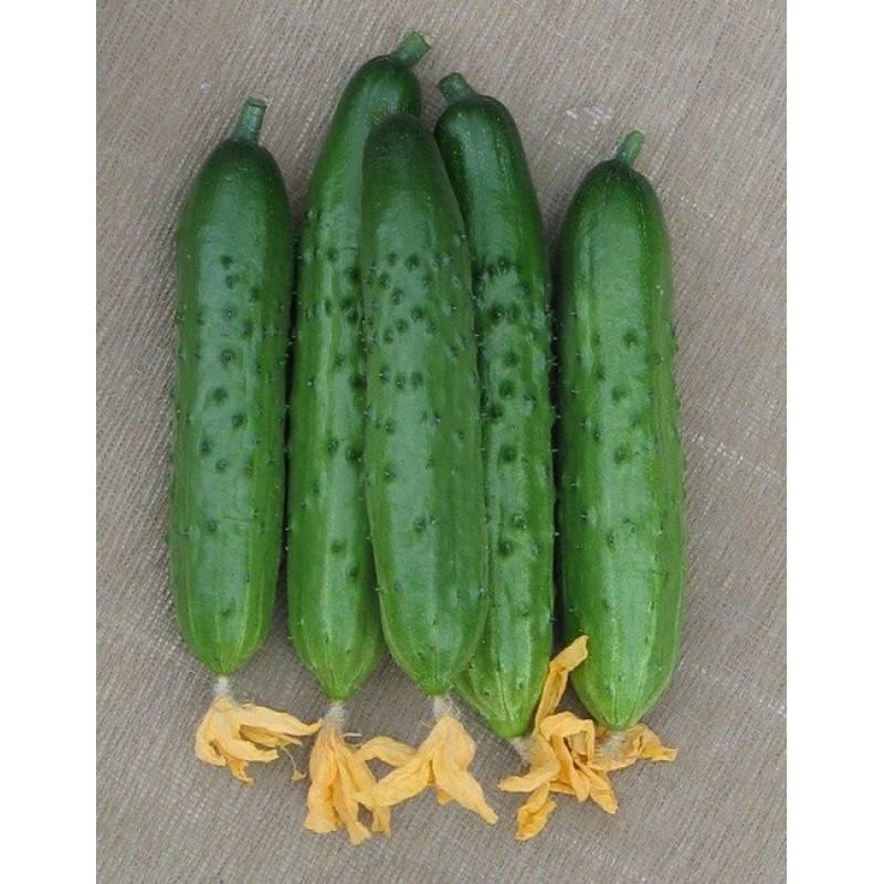 Огурец эстафета f1: описание сорта и особенности выращивания