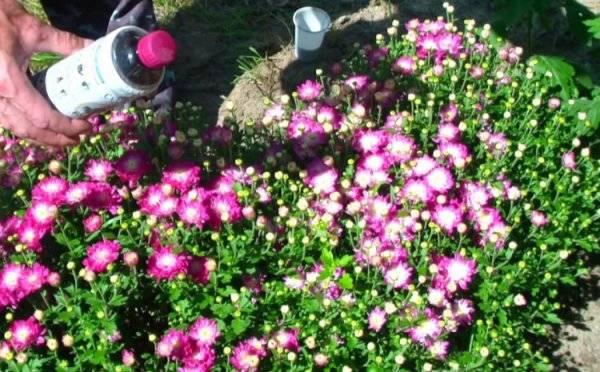 Как сохранить саженцы до весны?