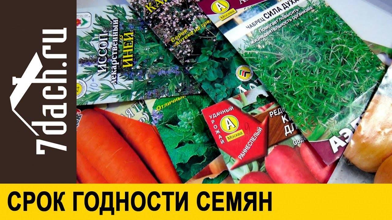 Срок годности семян укропа