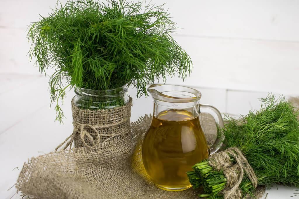 Как правильно заморозить свежую зелень на зиму: рецепты на любой вкус