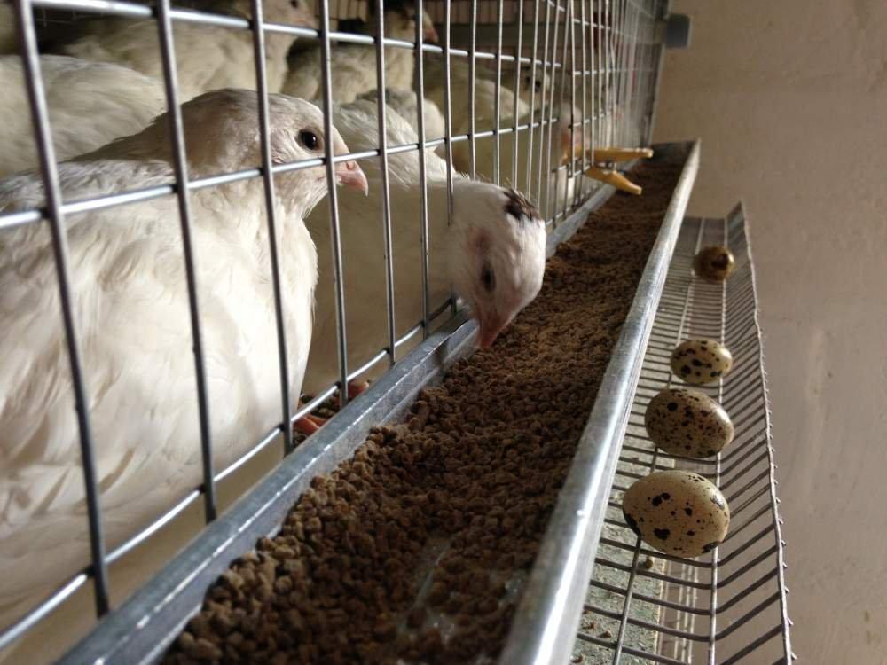 Cараи для животных и птицы: план постройки