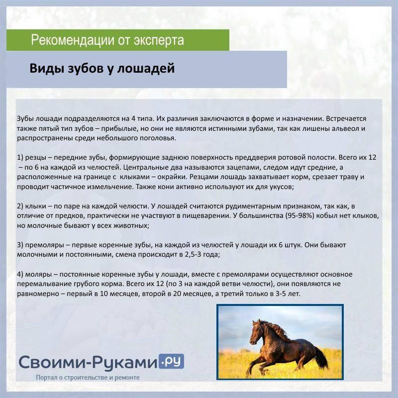 Этапы и методы тренировки лошадей