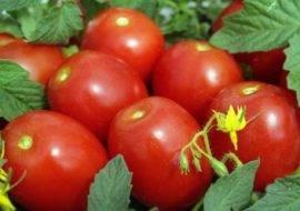Лучшие сорта помидоров сливка