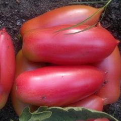 Фото, отзывы, описание, характеристика, урожайность сорта помидора «сосулька» — черная, оранжевая и желтая