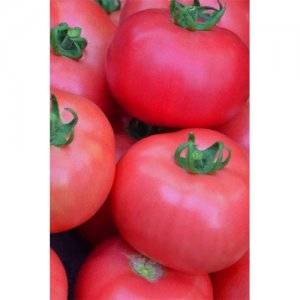 Томат ерофеич розовый: описание и характеристика сорта, выращивание и уход с фото