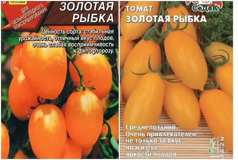 Сорт томата «золотая теща»: описание, характеристика, посев на рассаду, подкормка, урожайность, фото, видео и самые распространенные болезни томатов