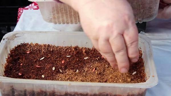 Японский способ выращивания огурцов в опилках: как прорастить, супербыстрые всходы