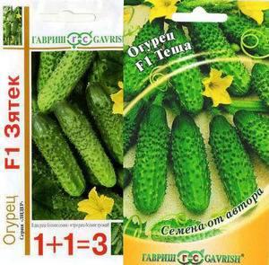 Огурцы сорта зятек f1 — хорошая всхожесть и отличный урожай