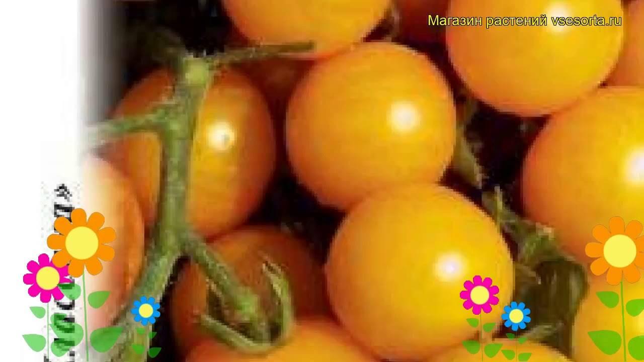 Сорт с ярко-жёлтыми плодами — томат золотая искра: описание помидоров и советы по их выращиванию