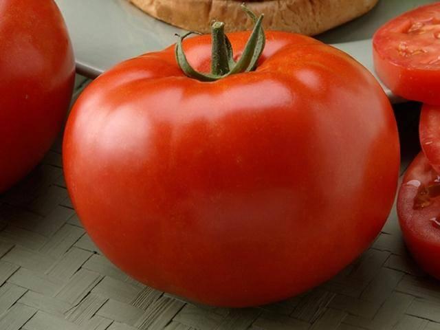 Не капризный в уходе, но при этом богатый на урожай томат «симпатяга»: фото, отзывы и секреты выращивания