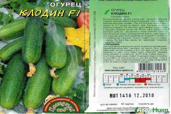 Сорт огурцов клодин f1