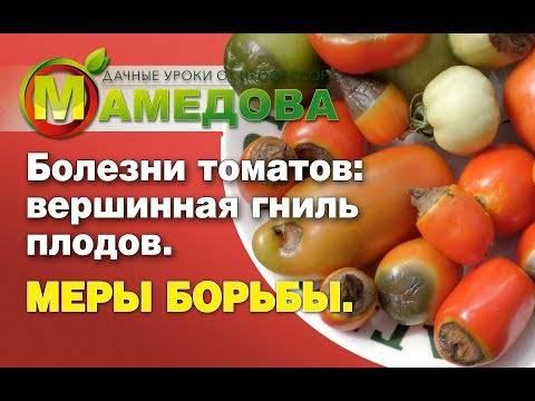 Секреты борьбы с вершинной гнилью помидор в теплице