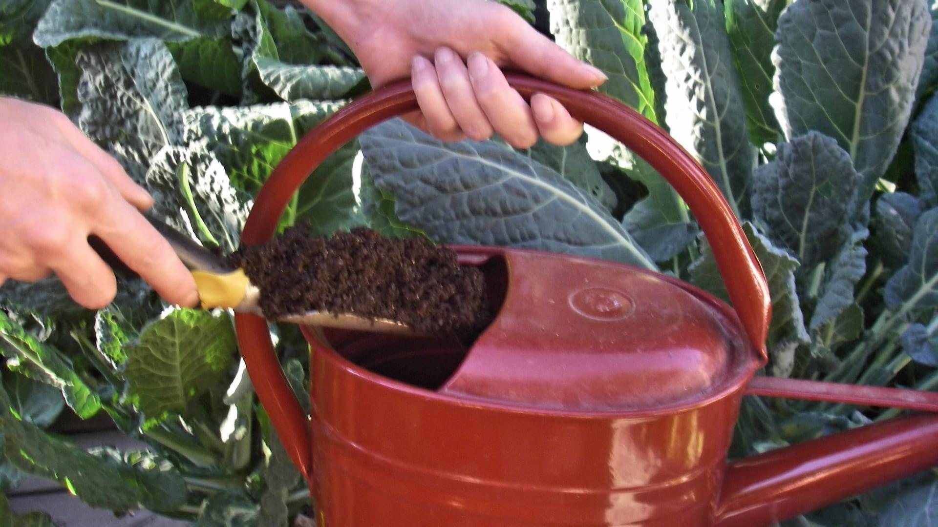 Выращивание капусты по лунному календарю в 2020 году