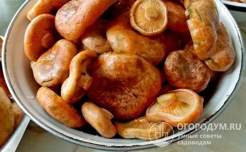 Простые пошаговые рецепты засолки рыжиков в домашних условиях на зиму в банках