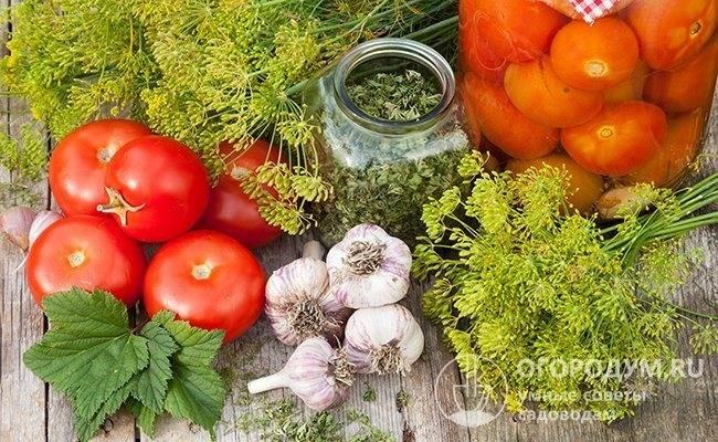 Бабушкины рецепты быстрого приготовления соленых помидоров на зиму