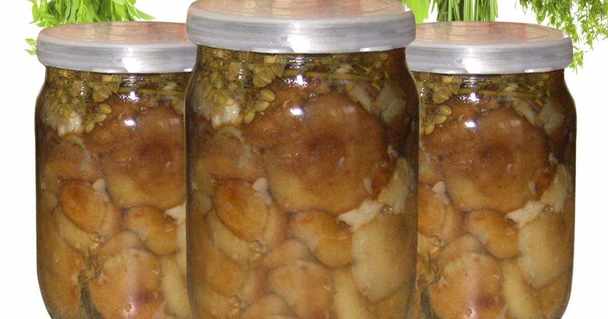 Маринованные на зиму волнушки пошаговый рецепт с картинками