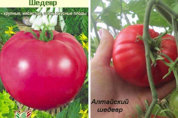 Разновидности сорта томата Шедевр, его описание и урожайность
