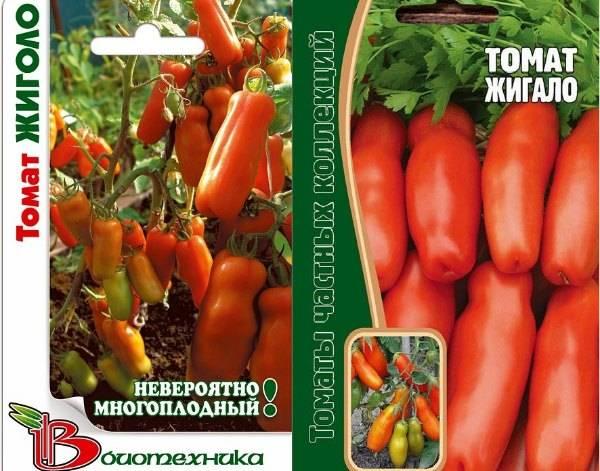 Сорт томатов «жигало»: характеристики, посадка, отзывы