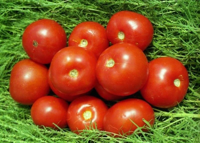 Хорош и удал, томат ямал: сортовое описание и особенности ухода