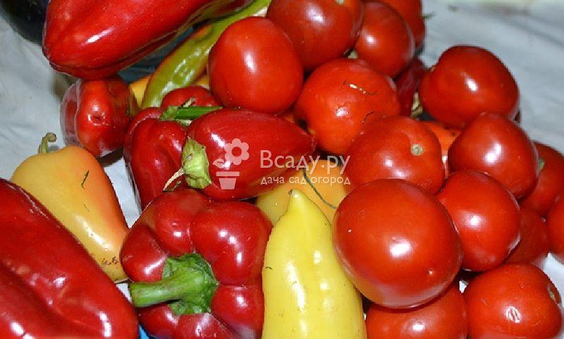 Когда сажать рассаду помидоров в подмосковье