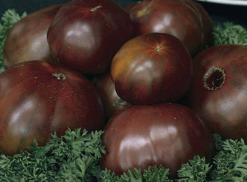 """Сорт томатов """"черный принц"""": особенности выращивания"""