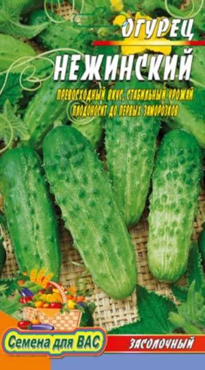 Харатеристика, описание и нюансы выращивания огурца нежинский