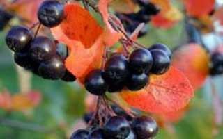 19 простых рецептов приготовления компота из черноплодной рябины на зиму