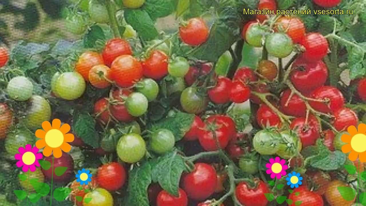 Томат янтарный мед: характеристика и описание сорта, урожайность с фото