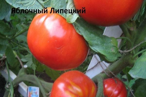 Томат яблочный спас — описание и характеристика сорта