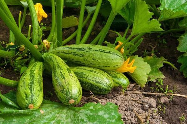 Правила проращивания семян перед посадкой в домашних условиях