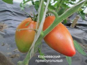 Томат корнеевский розовый — описание, фото, характеристика, особенности выращивания сорта