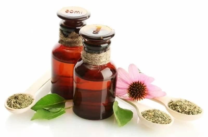 Эхинацея: лечебные свойства, показания и противопоказания к применению