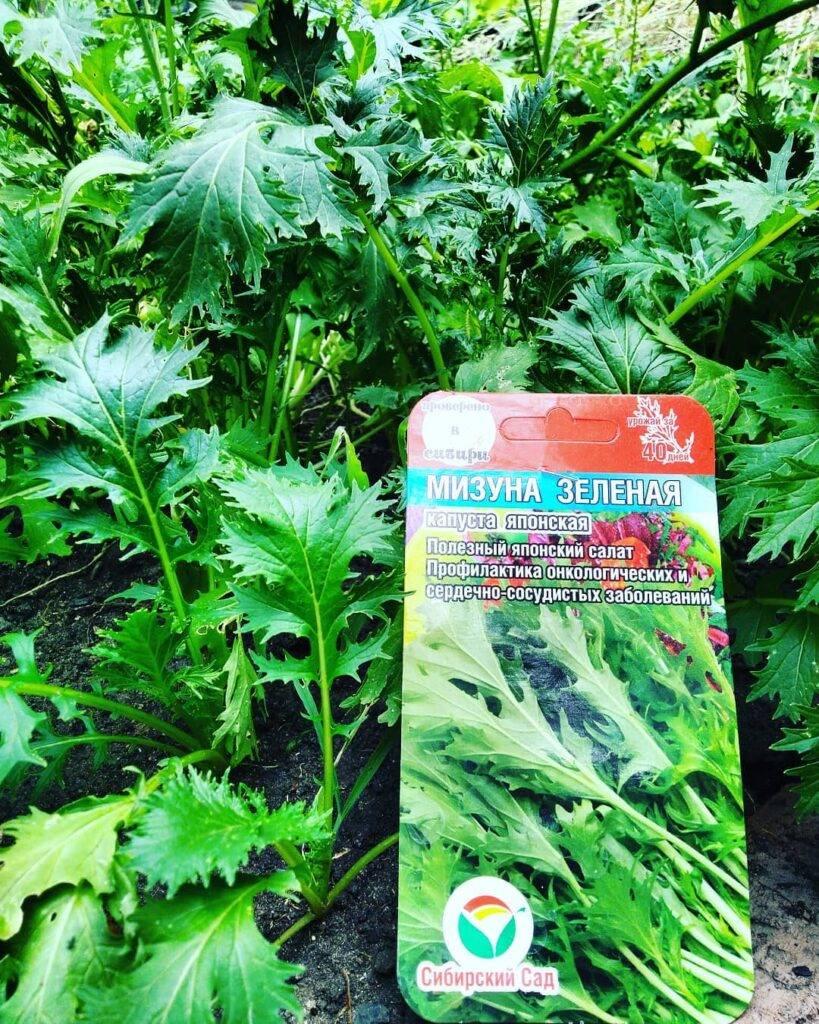 Когда посадить морковь и можно ли в июле или июне? какие сорта подойдут?