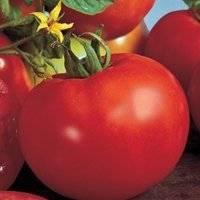 Высокоурожайный сорт томата «русская тройка»: описание, характеристика, посев на рассаду, подкормка, урожайность, фото, видео и самые распространенные болезни томатов