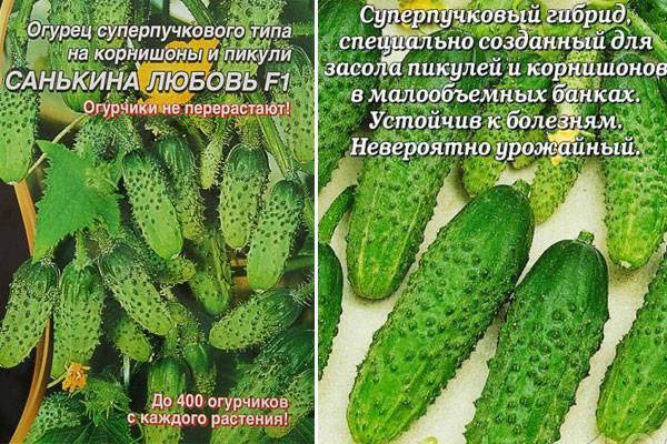 Описание сорта огурца Кадриль, особенности выращивания и ухода