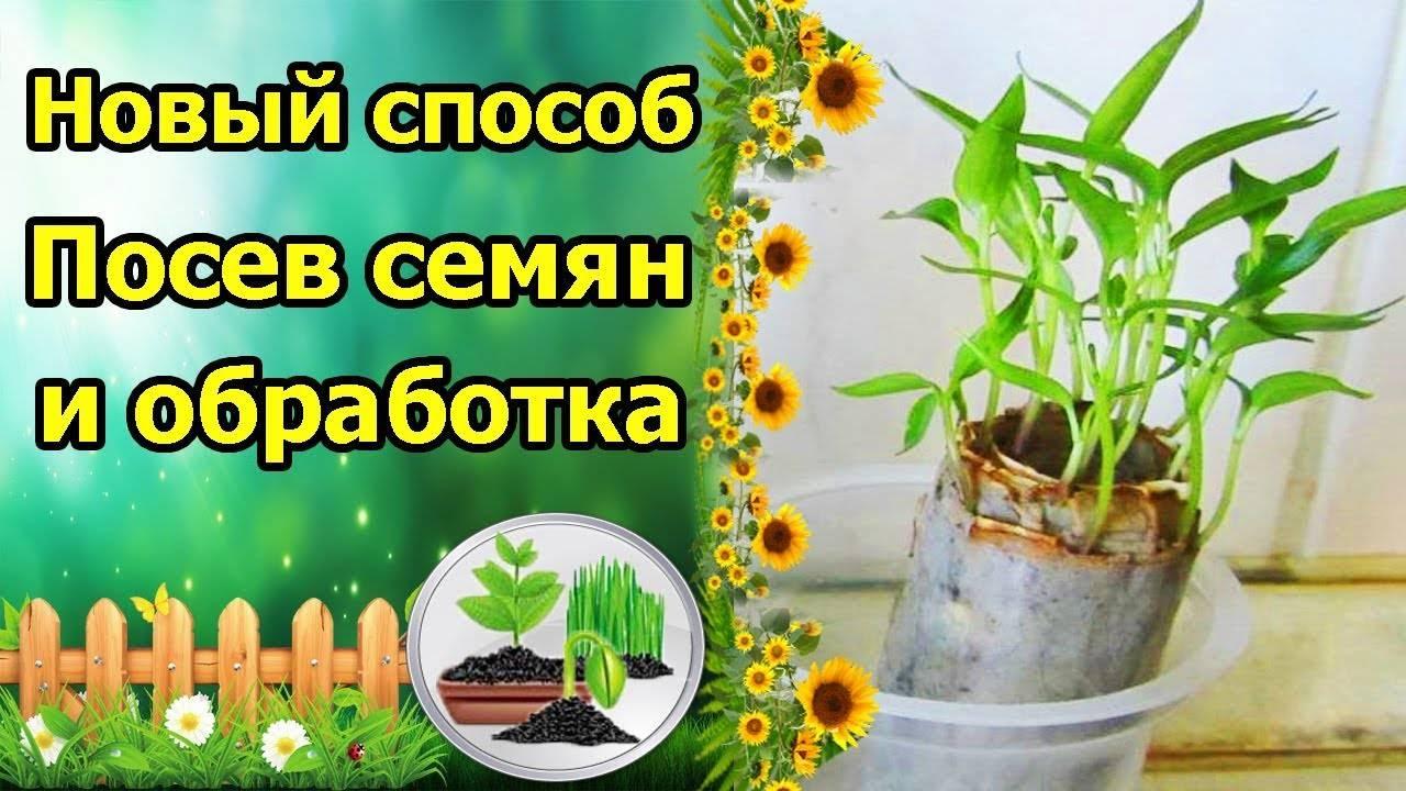 Правила обработки и посева томатов в кипяток