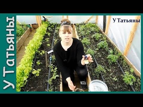 Нашатырный спирт для сада и огорода