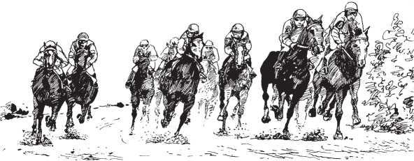 Аллюры лошадей: какие виды бывают и дополнительные рекомендации