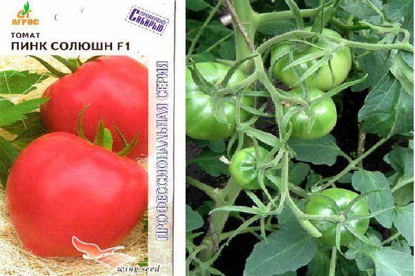 Раннеспелый, низкорослый, розовый сорт томата «пинк буш f1»