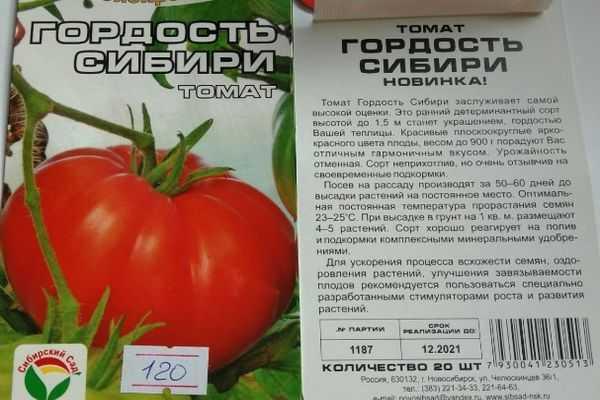 Правила выращивания из семян и ухода за брюквой в открытом грунте, с чем сажать и когда сеять