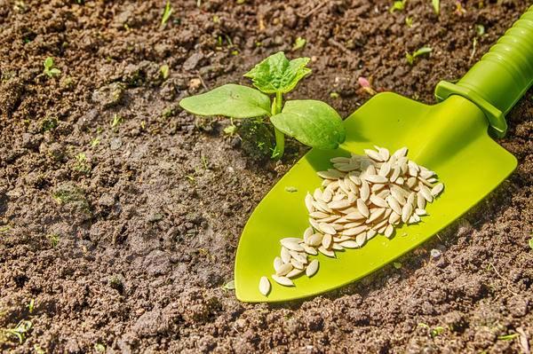 Секреты выращивания, агротехники и ухода за огурцами в открытом грунте