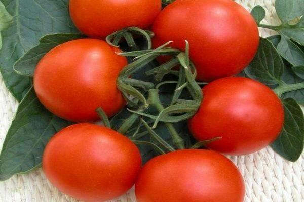Характеристика и описание сорта томата Пасхальное яйцо