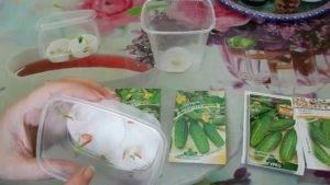 Как быстро проверить семена огурцов на всхожесть в воде, опилках и бумажном рулоне