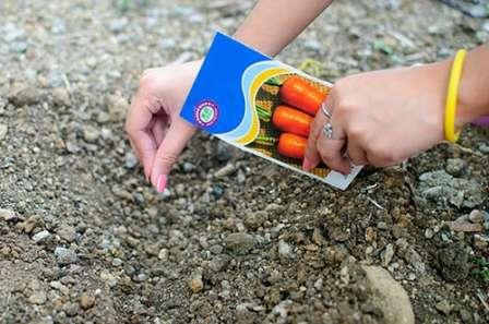 Какую схему посадки моркови лучше выбрать и почему это так важно?