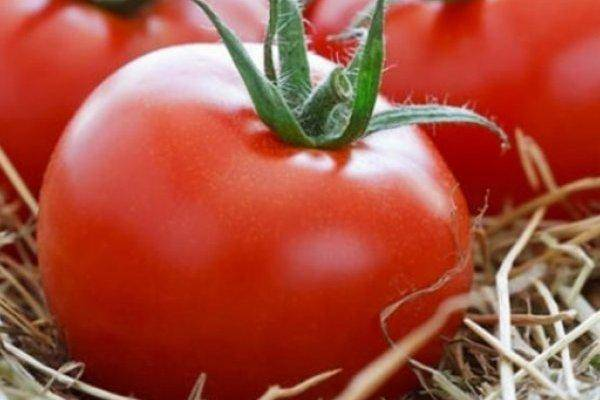 Характеристика и описание сорта томата Король Лондона, его урожайность