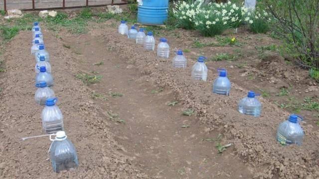 4 варианта капельного полива из пластиковых бутылок своими руками