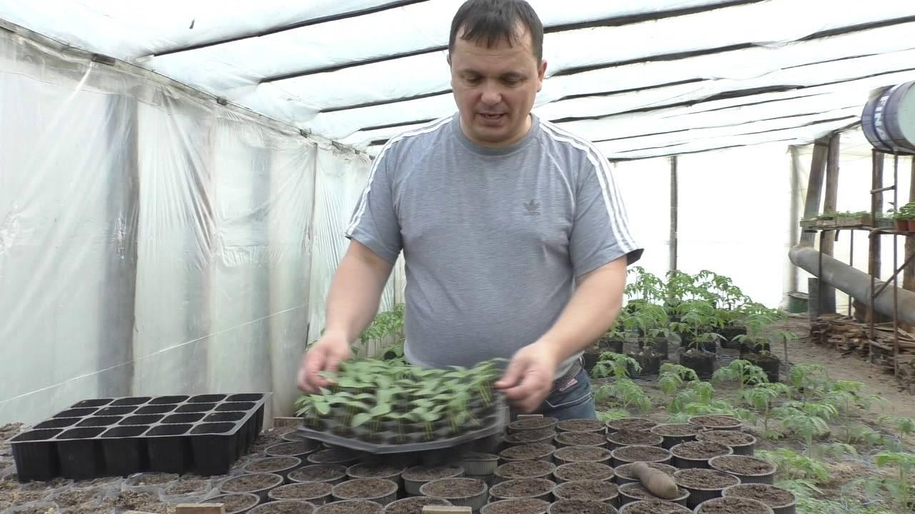 Пересаживаем рассаду в грунт