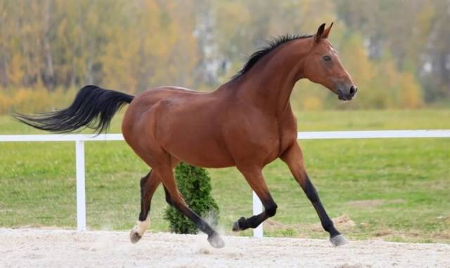 Классификации пород лошадей и их основные особенности