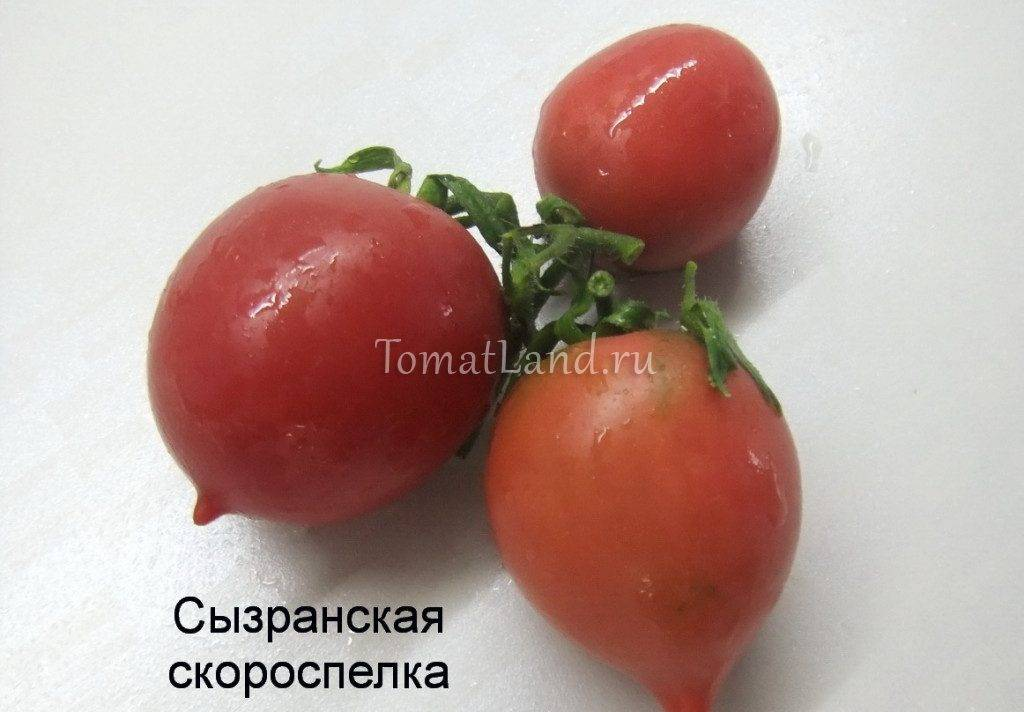 Как вырастить урожайный томат: советы и описание ухода за гибридом восток