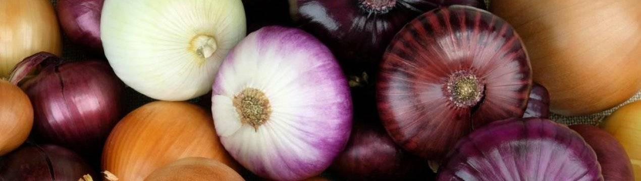 Методы и правила сушки лука